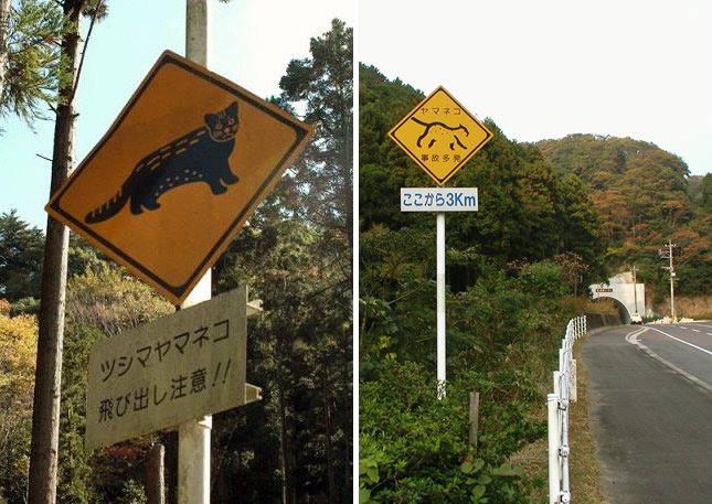 ツシマヤマネコ標識