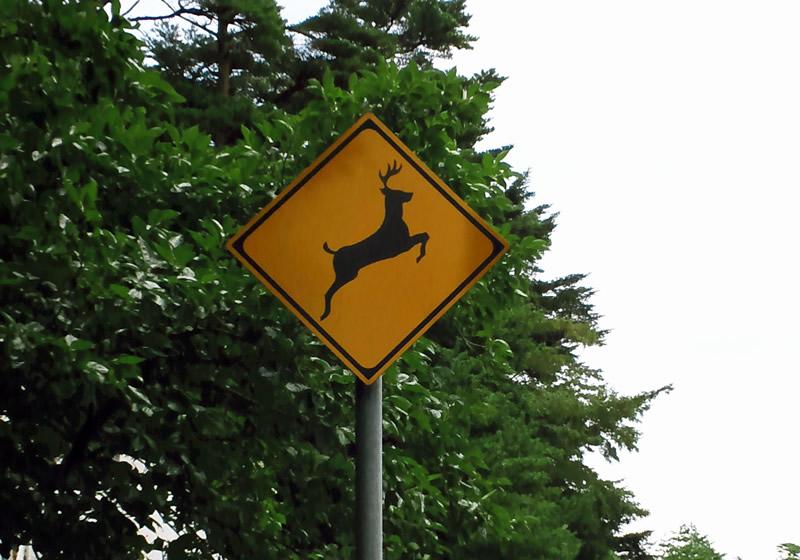 動物注意標識シカ