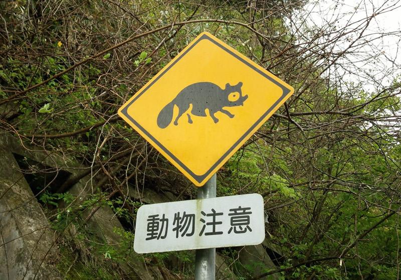 動物注意標識タヌキ
