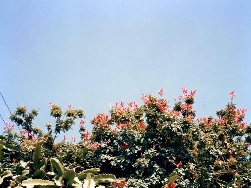沖縄の植物