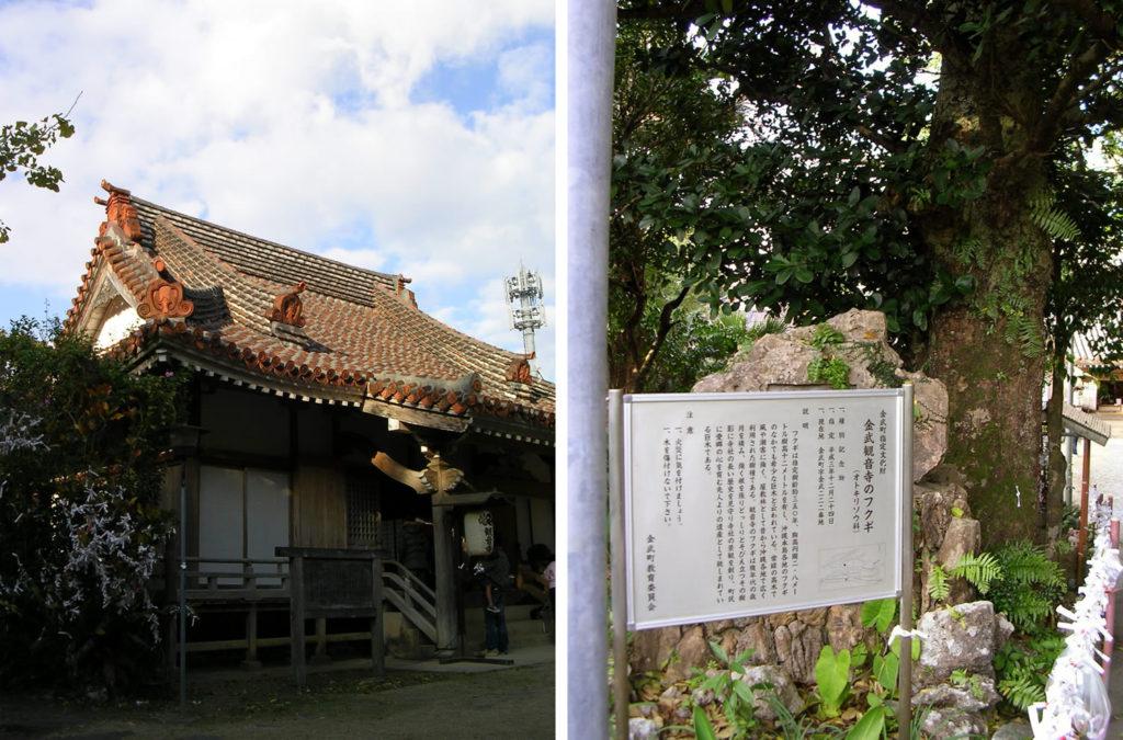 金武観音寺とフクギ
