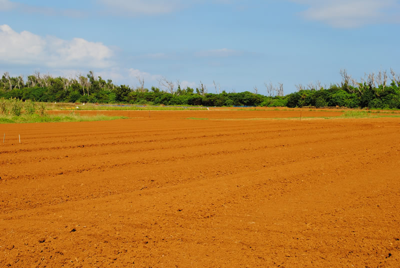 津堅島の畑