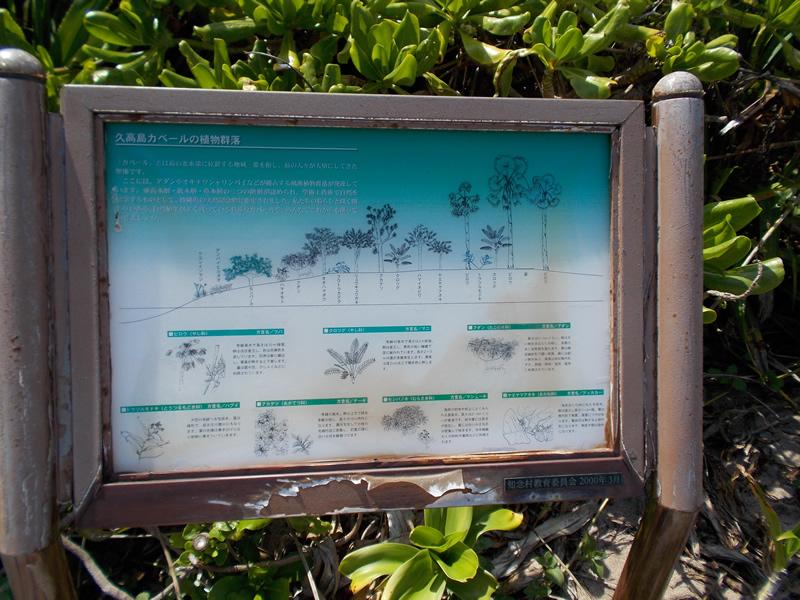 カベール岬の植物群