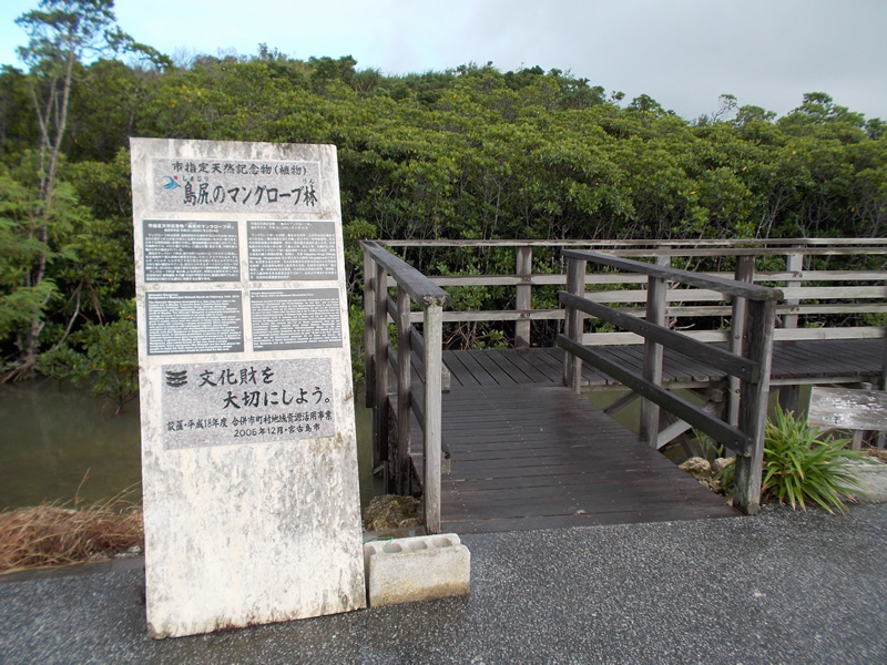 島尻のマングローブ林